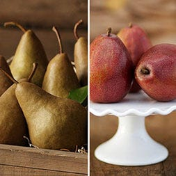Bosc Pears and Red D'Anjou Pears