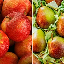 Fuji Apples and Seckel Pears