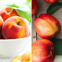 Northwest Peaches and Scarlet Nectarines