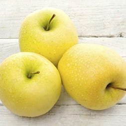 Golden Supreme Apples